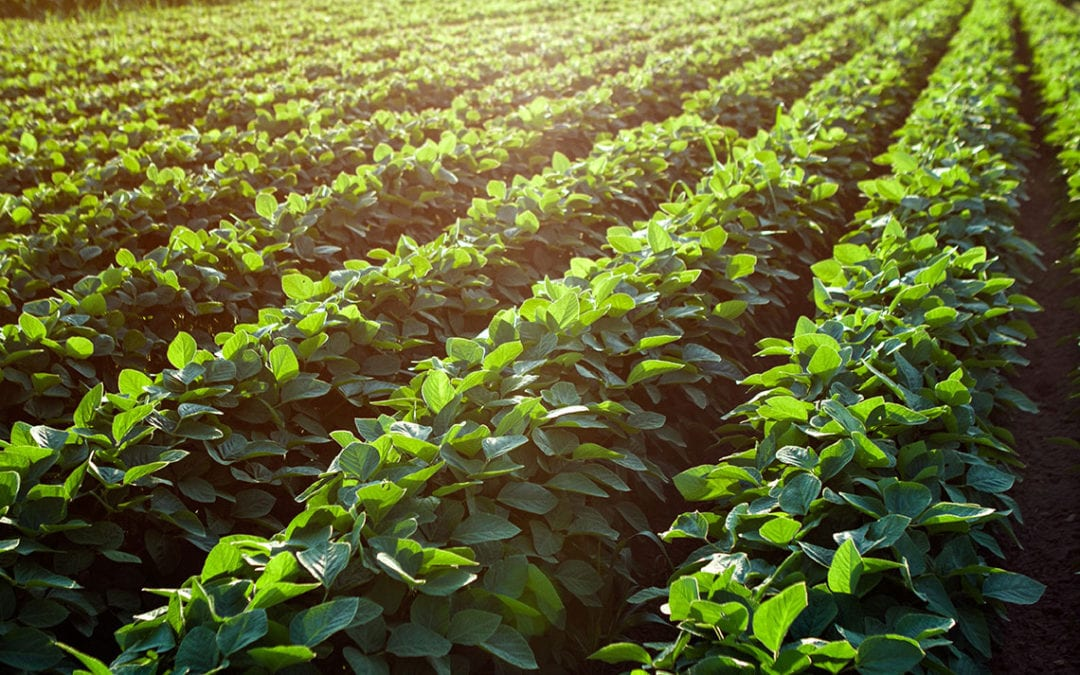 Farmers Learn Best Practices for Land Stewardship at Soybean School